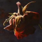 Rose  81 x 105 cm  oil on wood