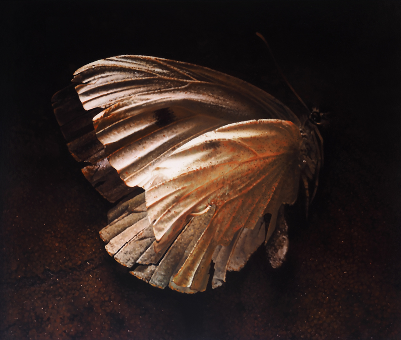 Cabbage white  oil on wood  63 x 75 cm